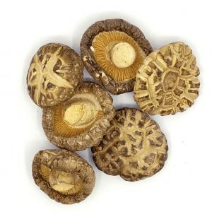 Japanese Shiitake Mushroom