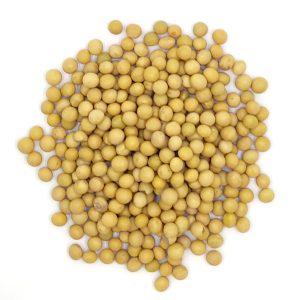 Organic Soy Bean
